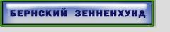 Бернский зенненхунд
